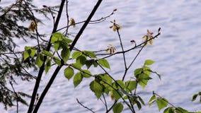Close up de um lago do norte vídeos de arquivo