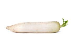 Close-up de um nabo branco isolado em um fundo branco, vegetais nutritivos do verão para dietas saudáveis Fotografia de Stock