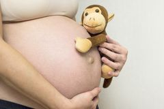 Close up de um novo, mulher gravida que guarda sua barriga com um brinquedo do macaco Brinquedo do macaco da terra arrendada da m fotografia de stock