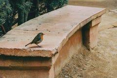 Close-up de um pássaro pequeno em um banco de pedra imagens de stock