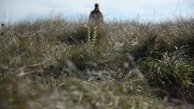 Close up de um pé dos mans cuja a silhueta entre além do horizonte no defocus Caminhadas através de um campo da grama selvagem filme