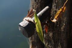 Close-up de um parafuso velho do metal no cargo de madeira Fotos de Stock Royalty Free