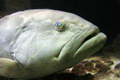 Close up de um peixe Foto de Stock Royalty Free