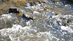 Close-up de um rio da montanha, corrente rápida filme