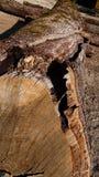 Close up de uma árvore do corte imagem de stock royalty free