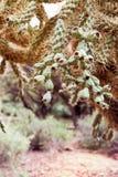 Close up de uma árvore do deserto na floresta nacional de Tonto, EUA Imagens de Stock Royalty Free
