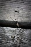 Close up de uma aranha do norte da doca imagem de stock royalty free