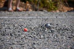 Close up de uma bola de aço para o petanque que bate a superfície do cascalho, Foto de Stock Royalty Free