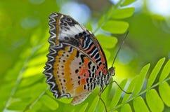 Close up de uma borboleta fotografia de stock