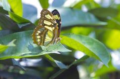 Close up de uma borboleta foto de stock