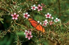 Close-up de uma borboleta colorida sobre flores em Horto Florestal, perto de Campos de Jordao imagem de stock royalty free
