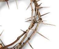 Close up de uma coroa de espinhos foto de stock