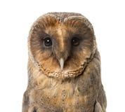 Close-up de uma coruja de celeiro, imagens de stock royalty free