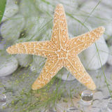 Close-up de uma estrela do mar - decoração marítima dos termas Imagens de Stock