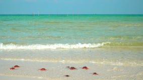 Close up de uma estrela do mar vermelha que encontra-se na praia a estrela do mar que encontra-se em uma praia tropical, ondas es vídeos de arquivo