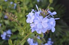 Close-up de uma flor fotos de stock
