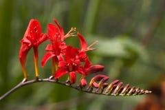 Close up de uma flor fotos de stock royalty free