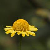 Close up de uma flor fotografia de stock royalty free
