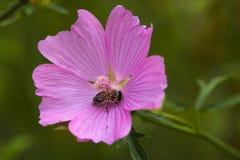 Close up de uma flor foto de stock royalty free