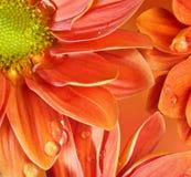 Close-up de uma flor alaranjada refletida na água Fotografia de Stock Royalty Free