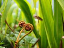 Close-up de uma flor bonita que possa ser encontrada em Cameron Highlands em Malásia imagem de stock royalty free