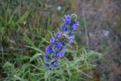 Close-up de uma flor no campo de Kent imagens de stock royalty free