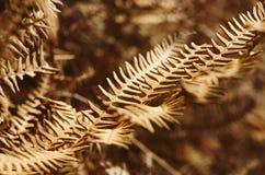 Close up de uma folha da samambaia desvanecida Fotos de Stock