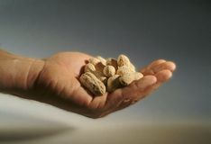 Close-up de uma mão completamente dos amendoins Imagem de Stock