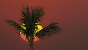 Close-up de uma palmeira em um fundo do nascer do sol vídeos de arquivo