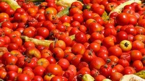 Close-up de uma pilha dos tomates Imagens de Stock Royalty Free