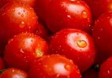 Close up de uma pilha de tomates de cereja molhados foto de stock royalty free