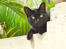 Close-up de uma posição preta do gato da rua em uma parede, iluminado pelo sol do verão fotografia de stock