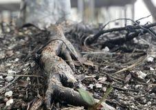Close up de uma raiz da árvore Fotografia de Stock