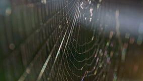 Close up de uma Web de aranhas filme