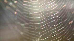 Close up de uma Web de aranhas vídeos de arquivo