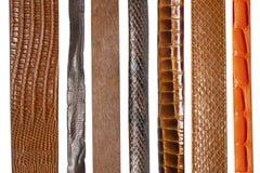 Close up de várias correias de couro fotografia de stock