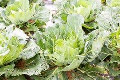 Close up de vegetais orgânicos imperfeitos com mordidas dos erros imagens de stock royalty free