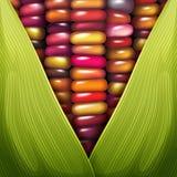Close up de vidro da textura da semente de Gem Corn ilustração royalty free