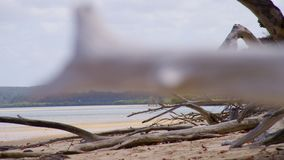 CLose up of a dead branch on a beach stock footage