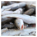 Close up of a dead fish Stock Photos