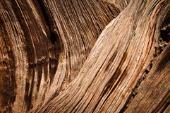 Close up of a dead tree Stock Photography