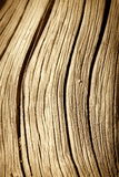 Close up of Dead Tree Trunk Royalty Free Stock Images