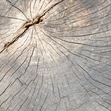 Close up of dead tree trunk Stock Image