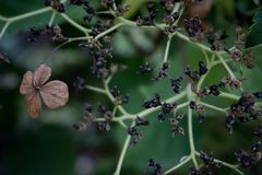 Close up of dead wild flower and dried plant fruits stock images