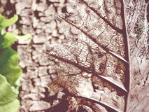 Close up decay leaf texture background Royalty Free Stock Image