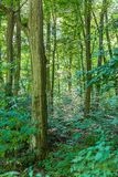 Close up of deciduous forest. Forest thickets. stock image