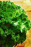 Close up of decorative cabbage Royalty Free Stock Photo
