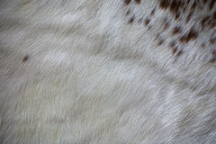 Close up Decorative fur carpet,  soft color of wool abstrace tex. Ture Stock Photos