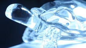 Close up decorativo da parte de Crystal Tortoise video estoque