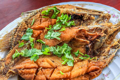 Close up Deep Fried Sea Bass With Fish Sauce (Pla Ga Pong Tod Nam Pla). In the plate decorate with coriander parsley leafs stock image